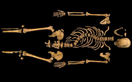 Human remains found in trench one of the Grey Friars dig. The complete skeleton showing the curve of the spine.